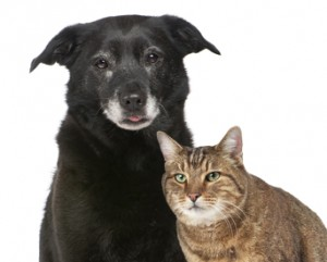senior animals